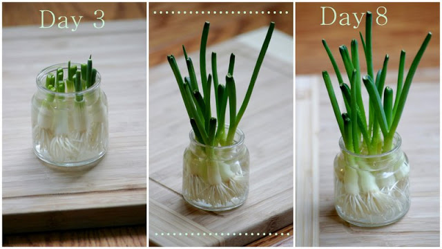 7 vegetables and fruits you can grow indoors from scraps for What plants can i grow indoors