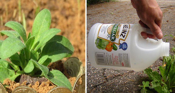 17-surprisingly-effective-gardening-tricks-that-keep-away-pests-fight-disease-and-improve-your-soil