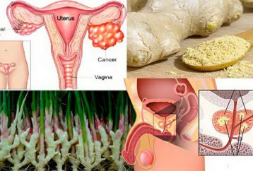 ginger-can-remove-cancer-prostate-ovarian-colon-better-chemotherapy1