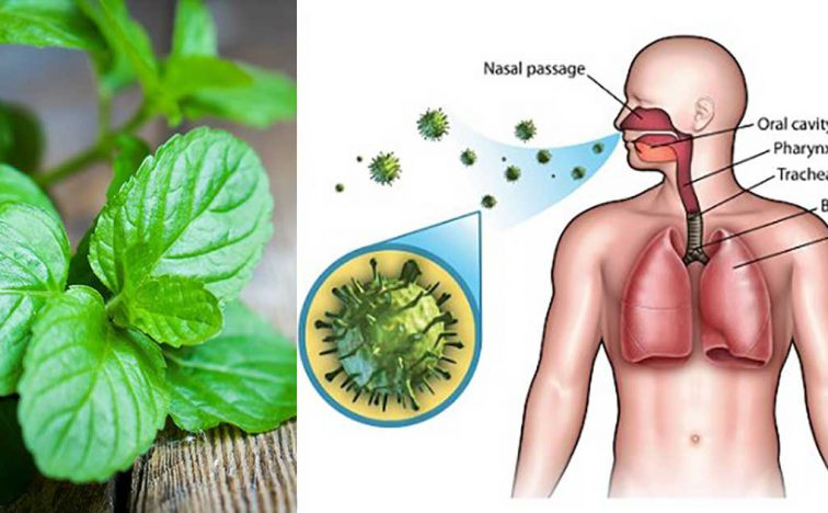 9-herbs-boost-immune-system-repair-lung-damage1