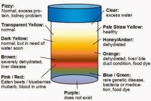 color-urine-health-indicator
