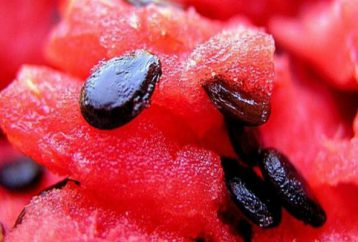 reading-going-eat-watermelon-every-day