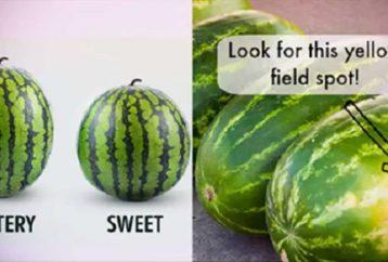 choose-sweetest-watermelon-5-tips